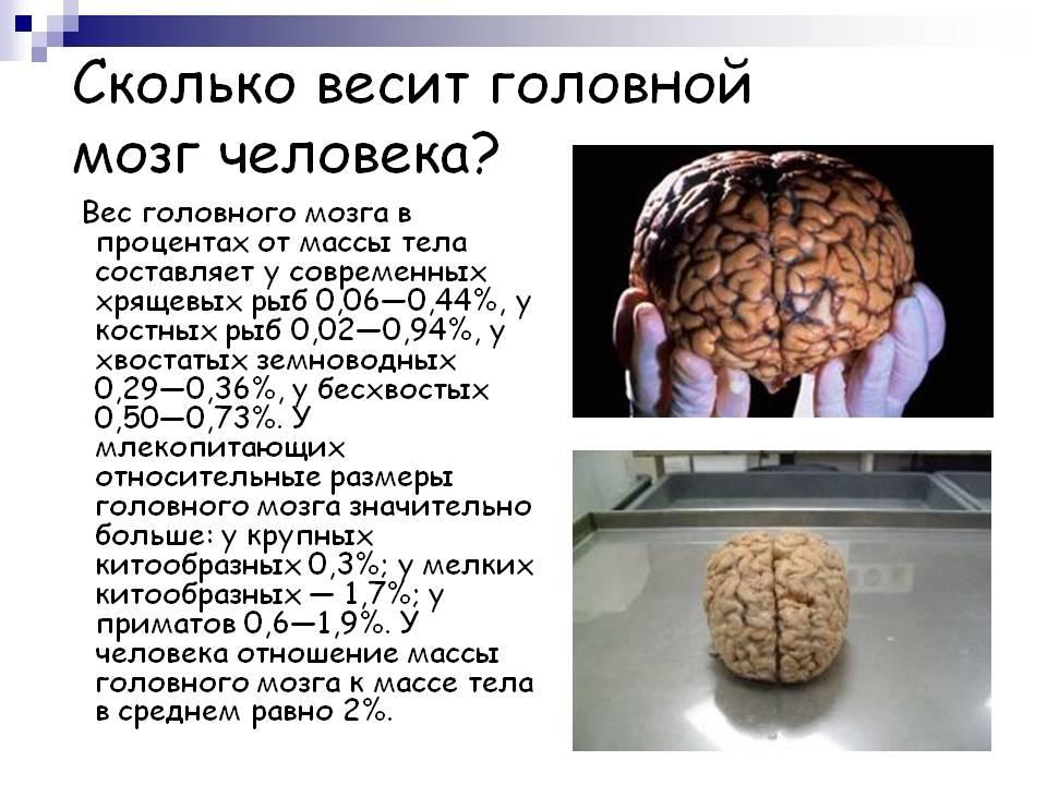 На сколько процентов ты используешь свой мозг?