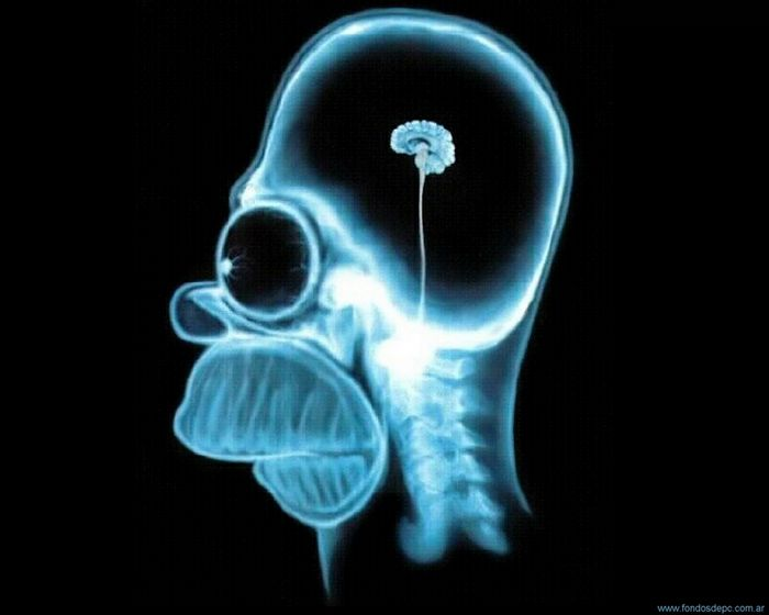 Процент работы мозга