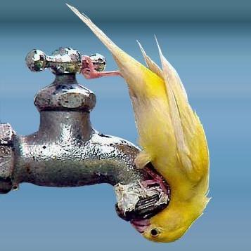 Сколько процентов воды в организме человека