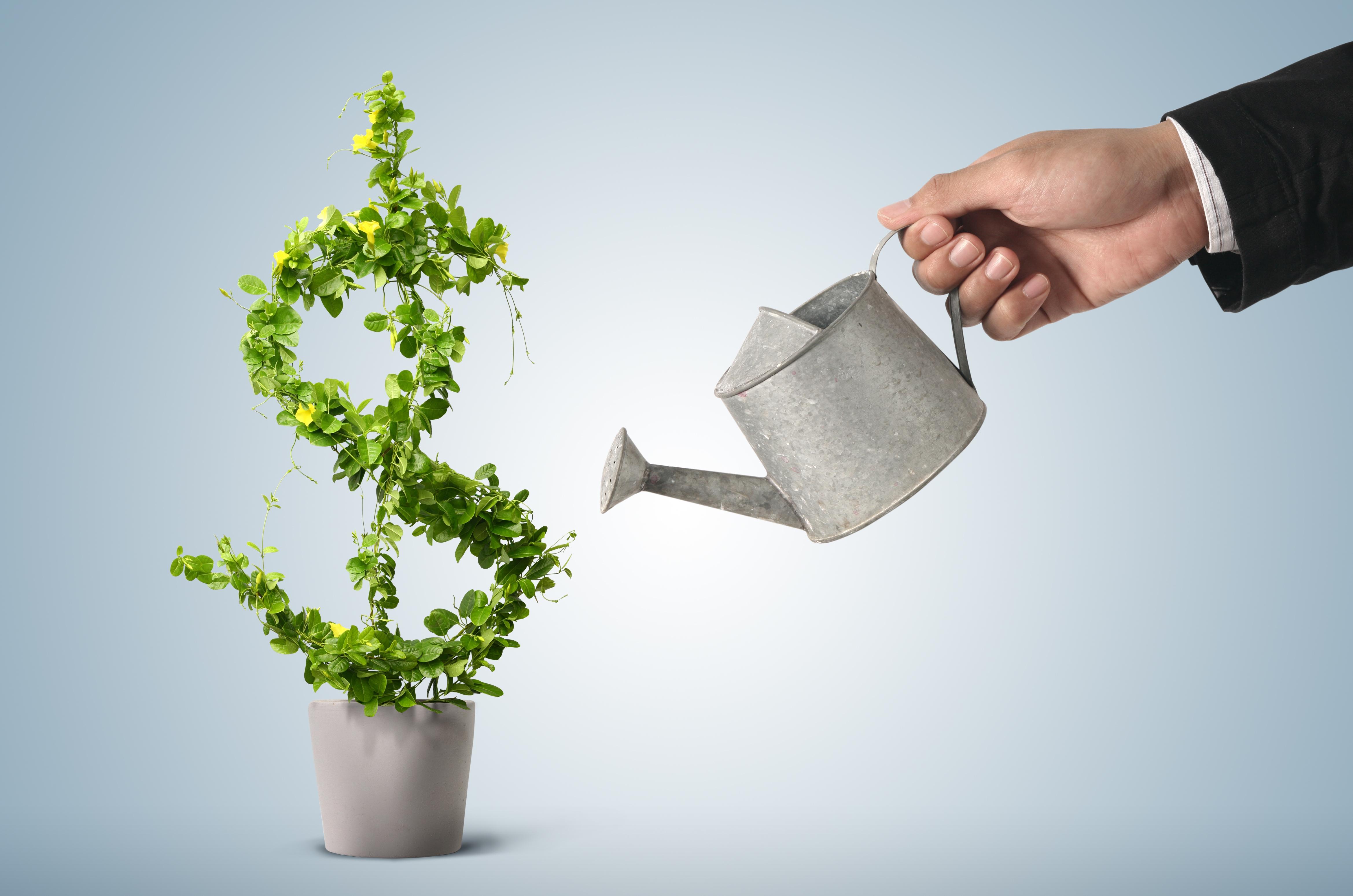 Все возможно! шампиньоны круглый год или бизнес приносящий стабильный доход.